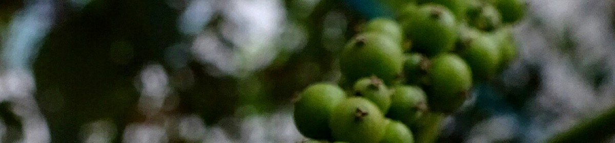 Abrachan Pudussery